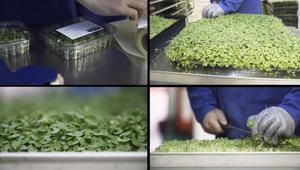 ملاجئ الحرب العالمية الثانية تزود أسواق لندن بالخضروات!