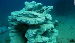 البحرين أول دولة توضع في مياهها الشعاب المرجانية المطبوعة بتقنية 3D