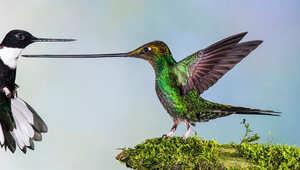 """بين """"التنين الأخضر"""" و""""عيون الأفعى"""".. صور للحياة البرية بأبهى إطلالتها"""