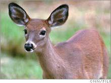 deer.03.jpg