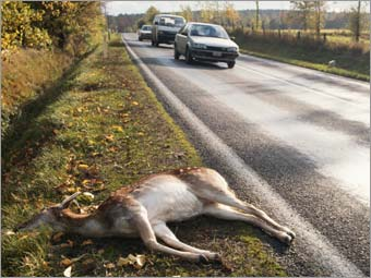 Roadkill collector