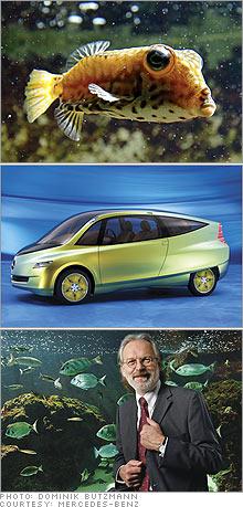 fish_car_gurtler.03.jpg