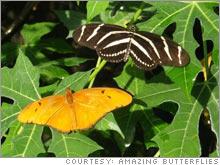 amazing_butterflies.03.jpg