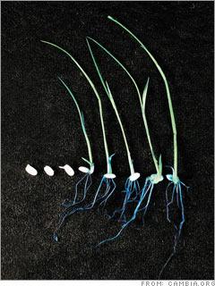 Telltale plants