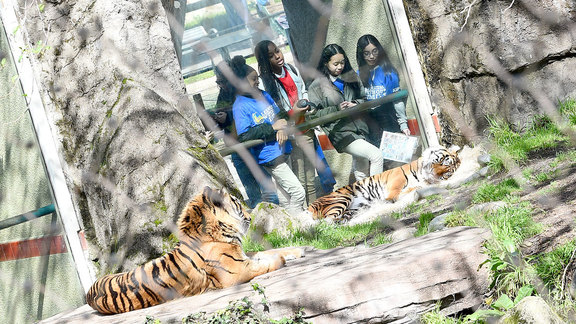 Learning without Limits at the San Francisco Zoo